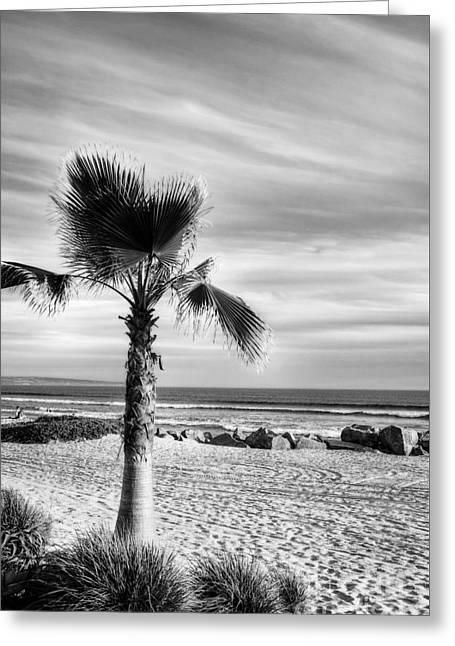 California Beach Art Greeting Cards - Coronado Beach Dreams BW Greeting Card by Mel Steinhauer