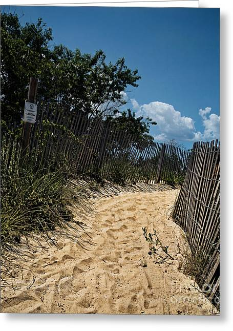 Print Greeting Cards - Corson Inlet trail Greeting Card by Tom Gari Gallery-Three-Photography