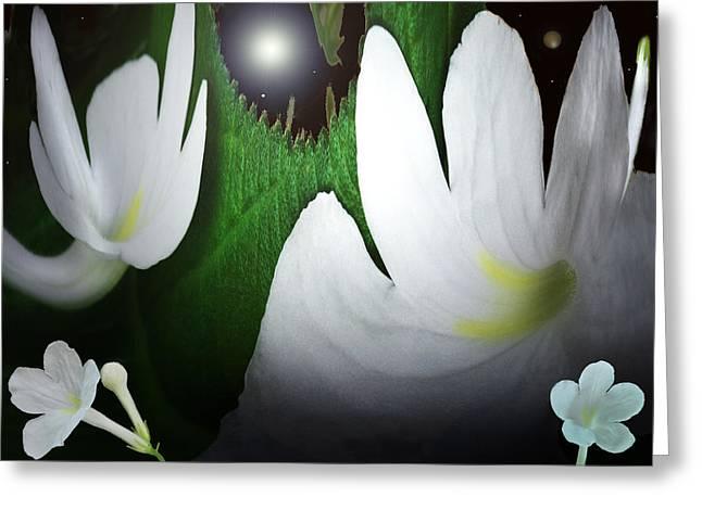 Floral Digital Art Greeting Cards - Cosmic Streptocarpus  Greeting Card by Terence Davis