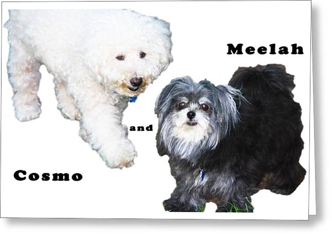 Cosmo And Meelah 2 Greeting Card by Terry Wallace