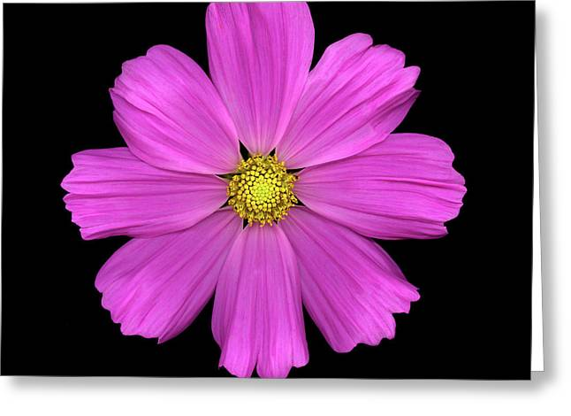 Value Greeting Cards - Cosmos Greeting Card by Christopher Gruver
