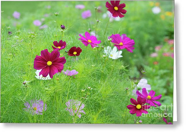 Cosmos Gazebo Flowers Greeting Card by Tim Gainey