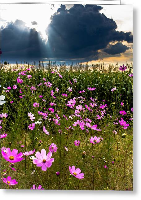 Photo Art Gallery Greeting Cards - Cosmos Greeting Card by George Fivaz