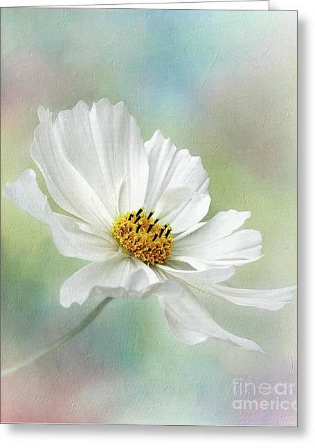 Cosmos Pastel By Kaye Menner Greeting Card by Kaye Menner