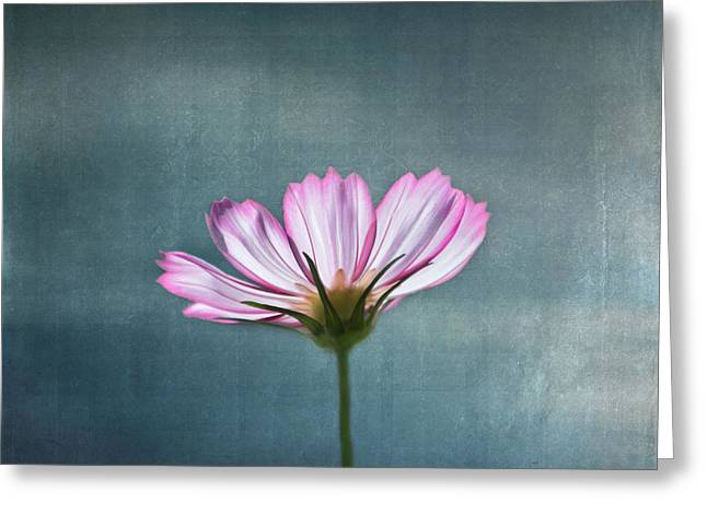 Garden Flowers Photographs Greeting Cards - Cosmos - Summer Love Greeting Card by Kim Hojnacki