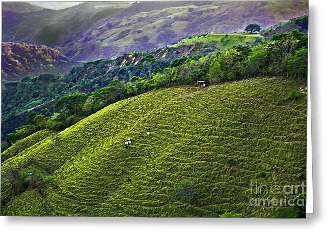 Costa Greeting Cards - Costa Rica Pasture 2 Greeting Card by Madeline Ellis