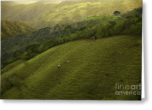Green Pastures Greeting Cards - Costa Rica Pasture Greeting Card by Madeline Ellis