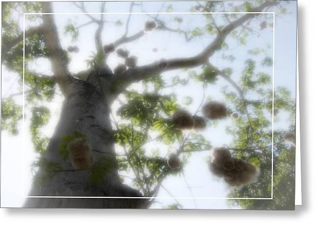 Cotton Ball Tree Greeting Card by Douglas Barnard