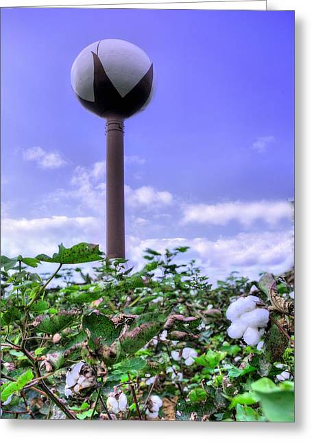 Cotton Country Greeting Card by JC Findley