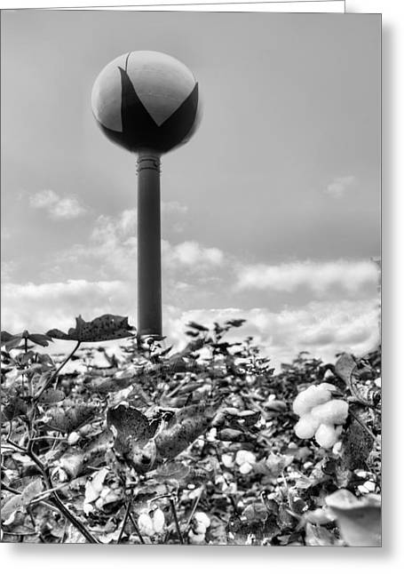 Cotton County Black And White Greeting Card by JC Findley