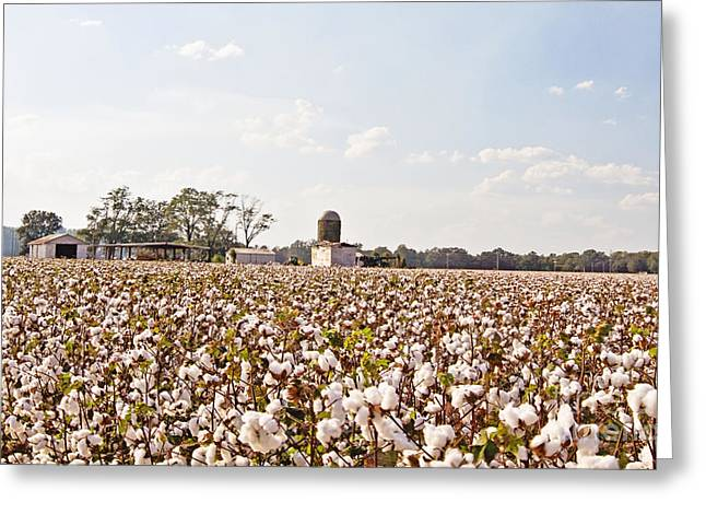 Arkansas Greeting Cards - Cotton Crop Greeting Card by Scott Pellegrin