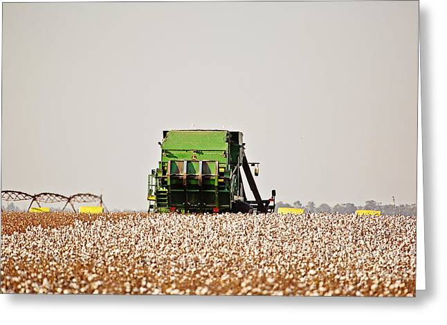 Arkansas Greeting Cards - Cotton Harvest Greeting Card by Scott Pellegrin