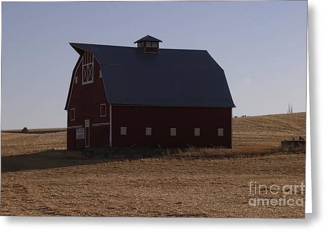 Red Roofed Barn Greeting Cards - Cougar Country  Greeting Card by Robert  Torkomian