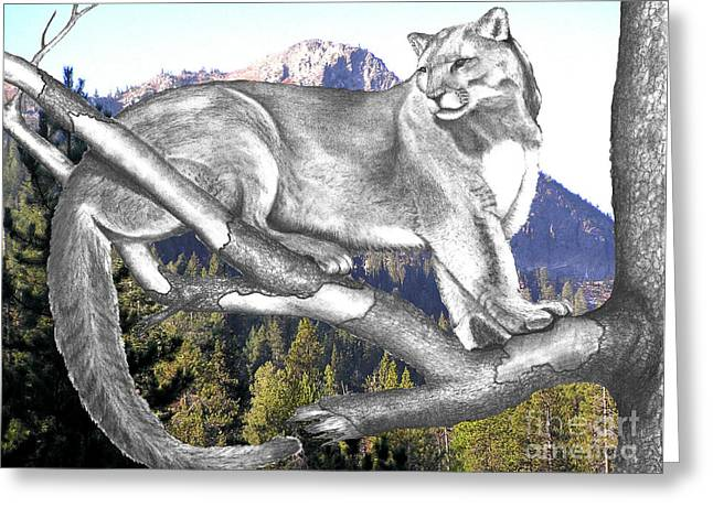 """photo Manipulation"" Drawings Greeting Cards - Cougar Mountain Greeting Card by Russ  Smith"