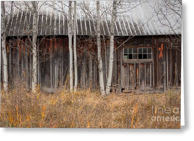 Country Barn Greeting Card by Idaho Scenic Images Linda Lantzy