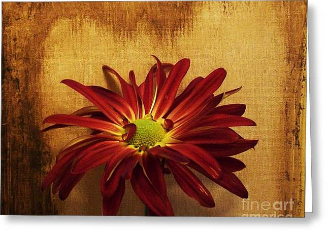 Large Poster Greeting Cards - Country Daisy Greeting Card by Marsha Heiken