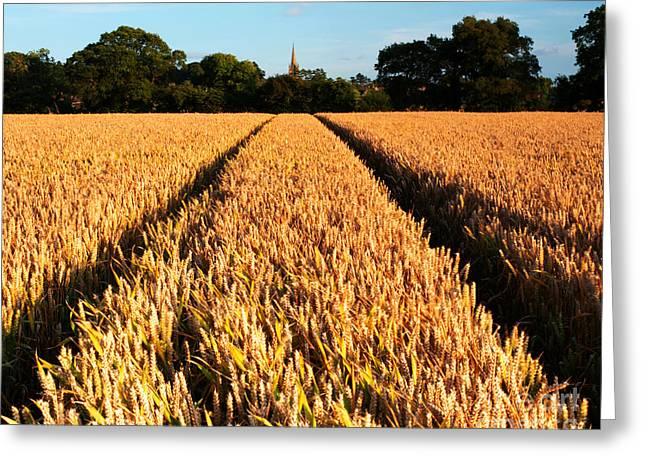 Farmers Field Greeting Cards - Country Evening Corn Field Greeting Card by Chris Smith