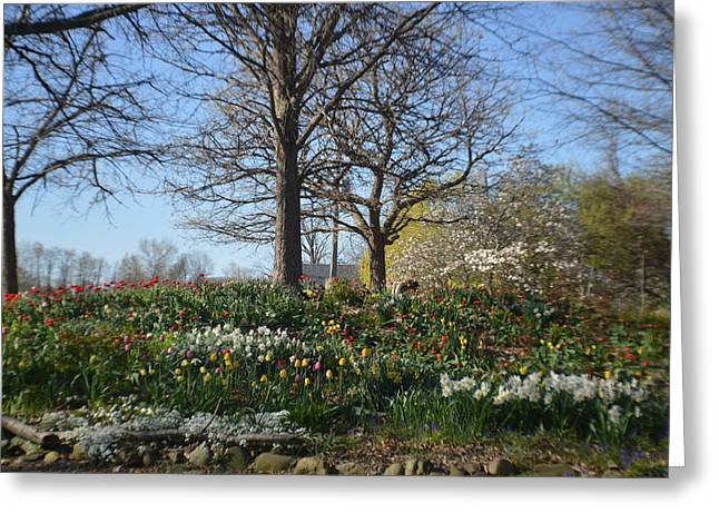 Abstract Digital Photographs Greeting Cards - Country Garden In Springtime 2015 Greeting Card by Tina M Wenger