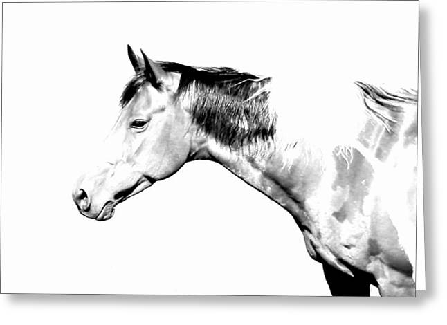 Charlotte Digital Art Greeting Cards - Country Horse Whiteout Greeting Card by Morgan Carter