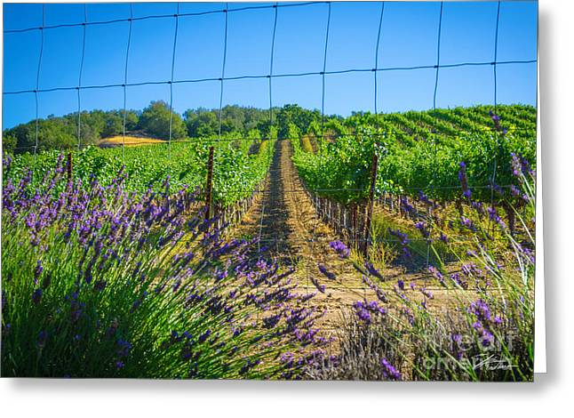 Countryside Mixed Media Greeting Cards - Country Lavender V Greeting Card by Shari Warren
