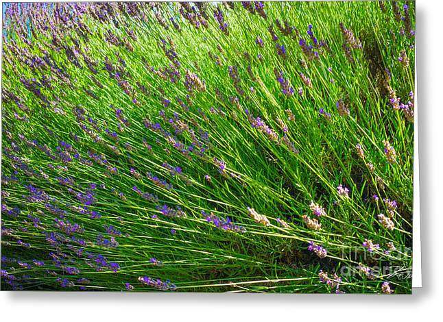 Countryside Mixed Media Greeting Cards - Country Lavender VI Greeting Card by Shari Warren
