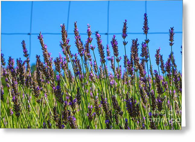 Countryside Mixed Media Greeting Cards - Country Lavender VII Greeting Card by Shari Warren