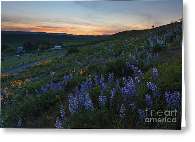 Scenic Farms Greeting Cards - Country Meadow Sunset Greeting Card by Mike Dawson