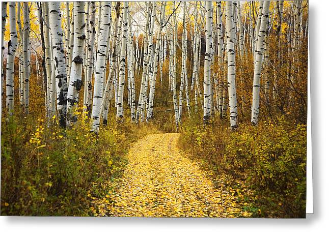 Ron Woods Greeting Cards - Country Road and Aspens 2 Greeting Card by Ron Dahlquist - Printscapes
