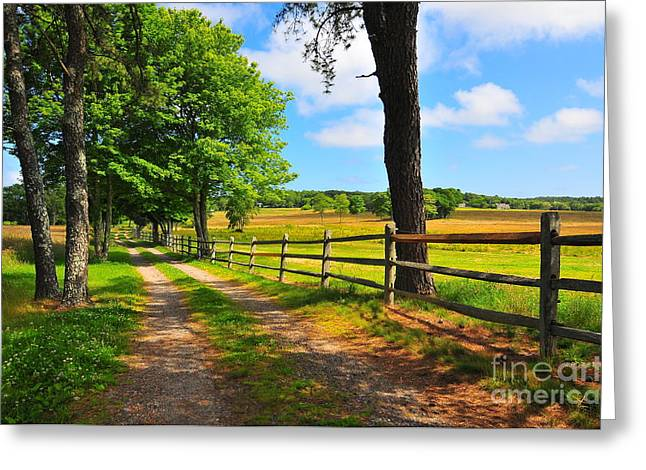 Carriage Road Greeting Cards - Country Road Greeting Card by Catherine Reusch  Daley