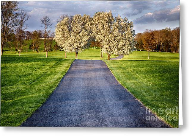 Hunterdon County Greeting Cards - Country Road During Early Spring Greeting Card by George Oze