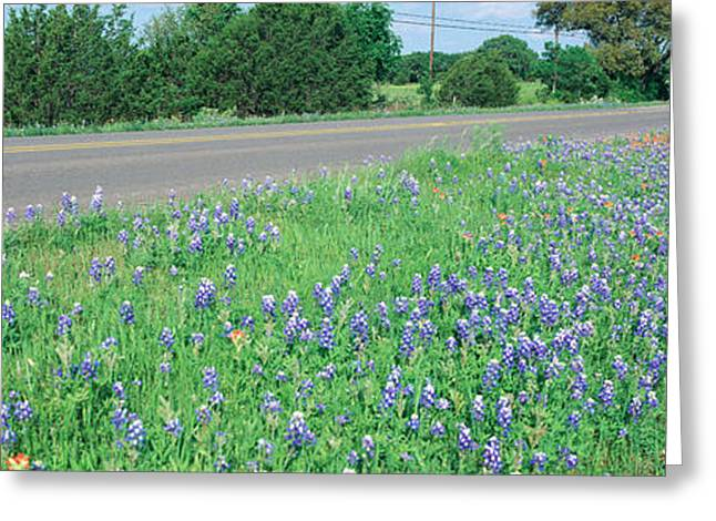 Panoramics Greeting Cards - Country Road Greeting Card by Panoramic Images