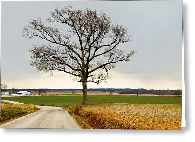 Indiana Scenes Greeting Cards - Country Road Greeting Card by Steven  Michael