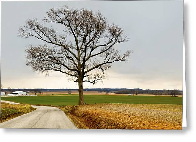 Winter Digital Photo Scene Greeting Cards - Country Road Greeting Card by Steven  Michael