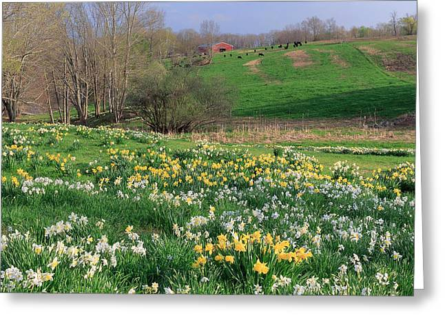 New Greeting Cards - Country Spring Greeting Card by Bill  Wakeley