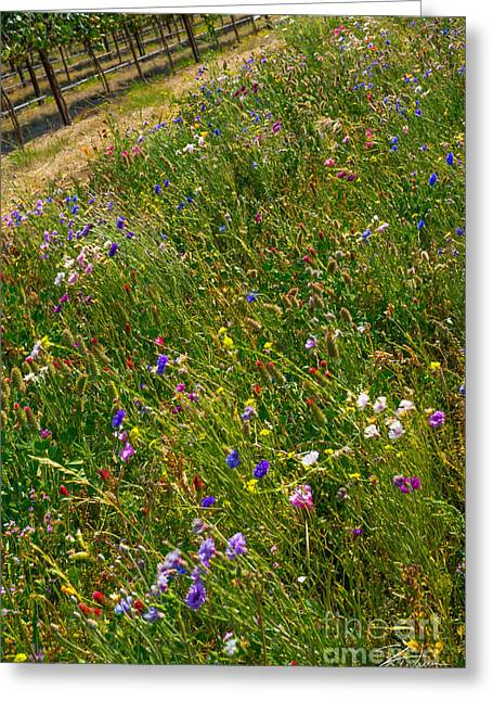 Countryside Mixed Media Greeting Cards - Country Wildflowers I   Greeting Card by Shari Warren