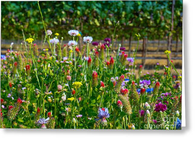Countryside Mixed Media Greeting Cards - Country Wildflowers II Greeting Card by Shari Warren