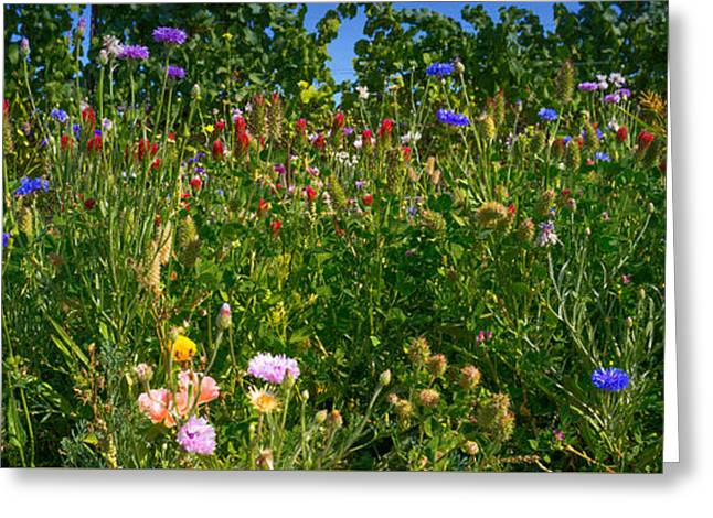 Countryside Mixed Media Greeting Cards - Country Wildflowers III Greeting Card by Shari Warren
