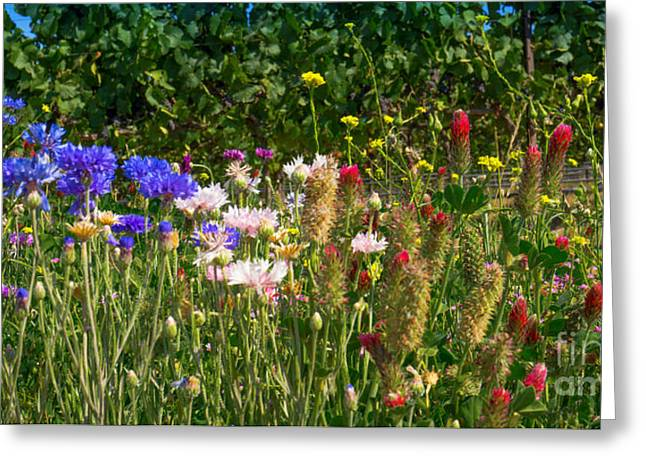 Countryside Mixed Media Greeting Cards - Country Wildflowers IV Greeting Card by Shari Warren