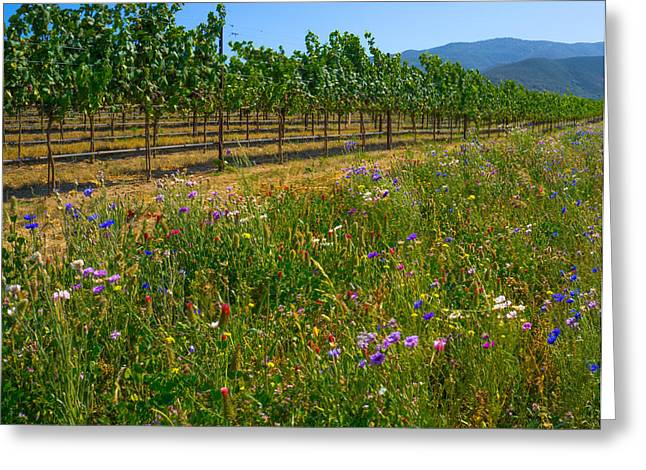 Countryside Mixed Media Greeting Cards - Country Wildflowers V Greeting Card by Shari Warren