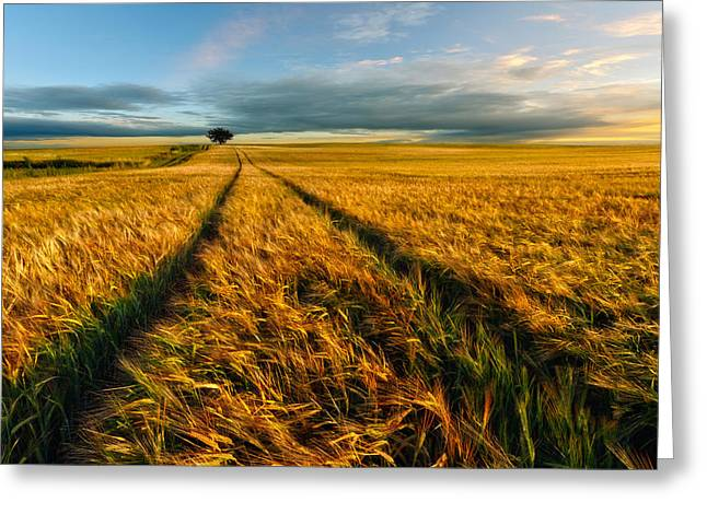 Windy Photographs Greeting Cards - Countryside Greeting Card by Piotr Krol (bax)