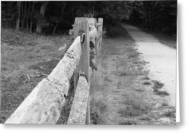 Beauty Mark Greeting Cards - County Fence  Greeting Card by D R TeesT