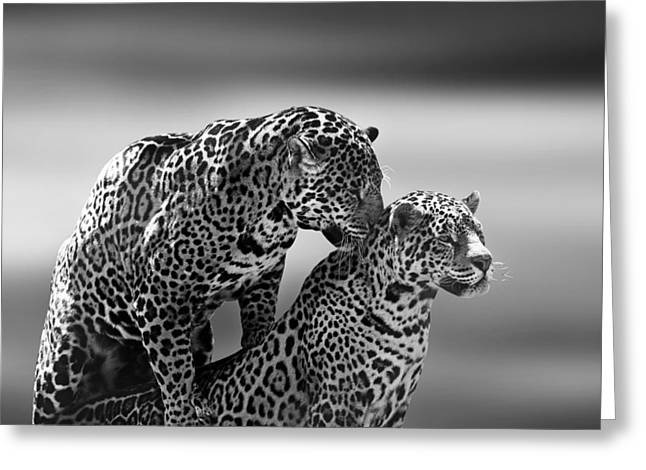 Jaguars Greeting Cards - Couple Greeting Card by Ivan Vukelic