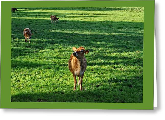 Warm Greeting Cards - Cow 821 Greeting Card by Thom Zehrfeld