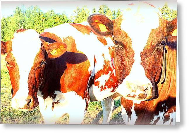 Cows Missing The Boys  Greeting Card by Hilde Widerberg