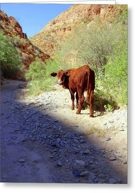 Cow In The Canyon Greeting Card by Susan Lafleur