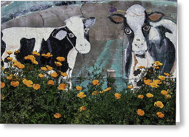 Cow Photographs Greeting Cards - Cow Mural and Poppies Greeting Card by Garry Gay