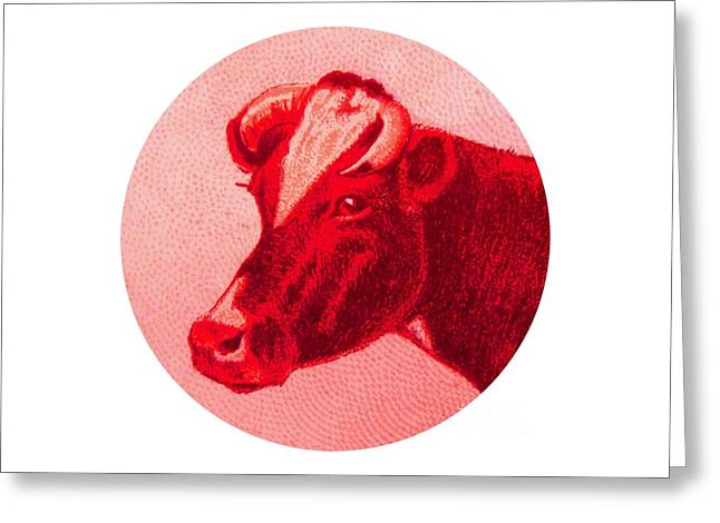 Cow Vi Greeting Card by Desiree Warren