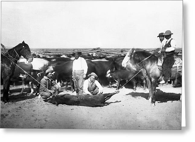 Hot Iron Greeting Cards - COWBOYS BRANDING CATTLE c. 1900 Greeting Card by Daniel Hagerman
