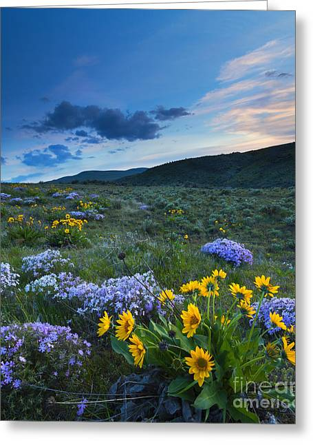 Phlox Greeting Cards - Cowiche Spring Sunset Greeting Card by Mike Dawson