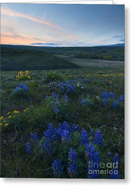 Central Washington Greeting Cards - Cowiche Wildflower Sunset Greeting Card by Mike Dawson